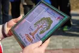 Аллея семейных деревьев появилась в Могилеве